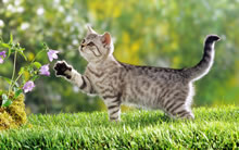 高清宠物猫咪图