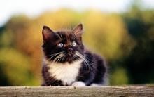 24英寸猫咪宽屏高清壁纸