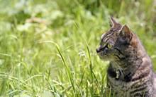 高清晰猫猫写真