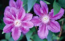 鲜花花瓣图库