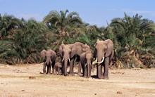 大象宽屏壁纸