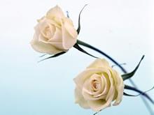 高清晰室内鲜花