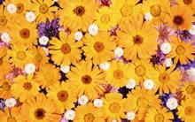 花瓣高清壁纸