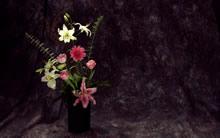 22英寸宽屏鲜花