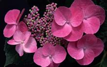1680宽屏鲜花