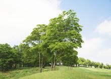 绿色的树林草地
