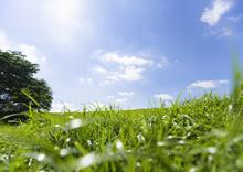 绿色的草坪树林